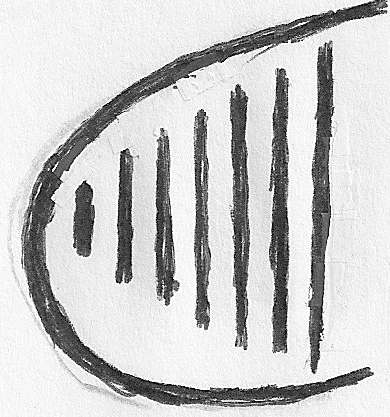 Shape of First Lyre 2